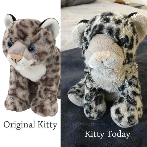 kittycomparison